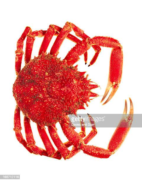 red crab - alaskan king crab stock pictures, royalty-free photos & images