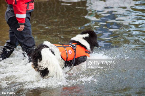 Red Cross water safety dog on Lake Windermere