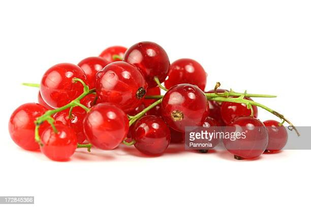 Red Currant -  XL