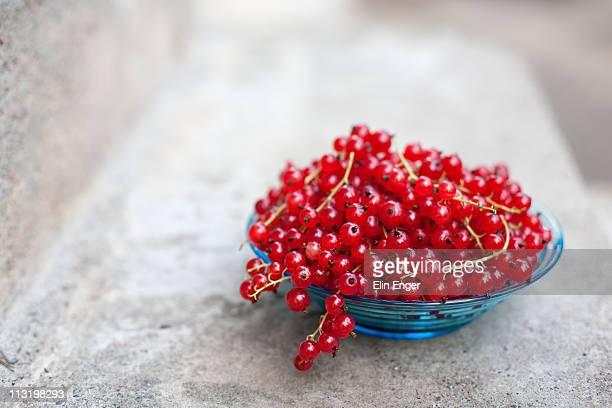 red currants berries - johannisbeere stock-fotos und bilder