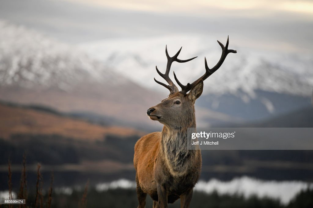 Winter Scenes In Glen Coe : News Photo