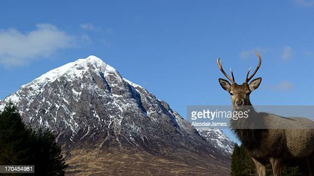 Red Deer and Buachaille Etive Mòr widescreen