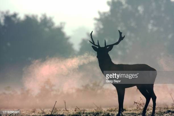 red deer - east stock pictures, royalty-free photos & images