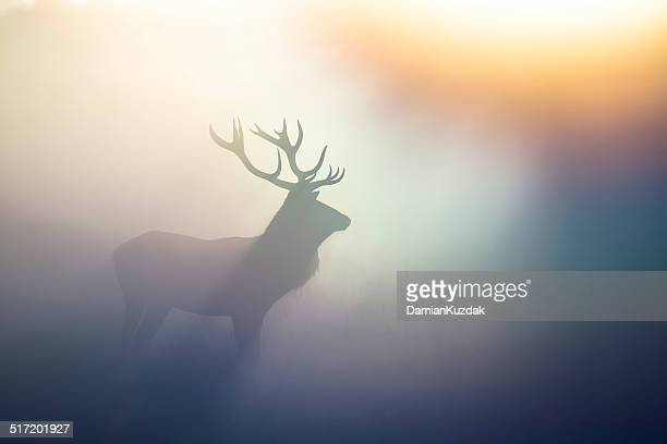 60 Top Antler Pictures, Photos, & Images - Getty Images