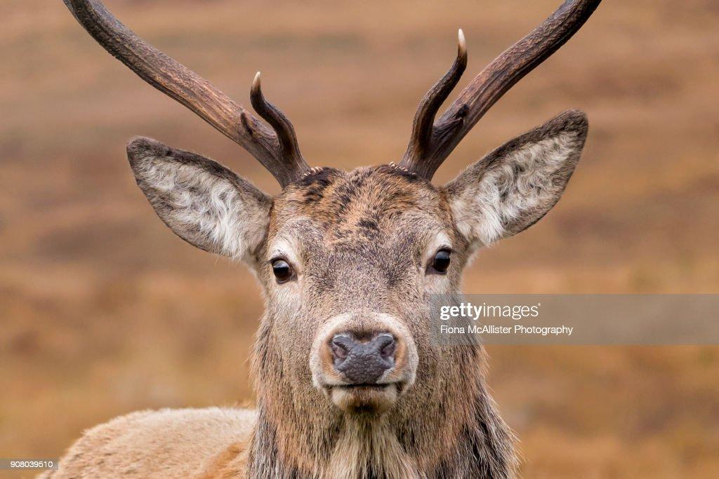 from Landry hook up red deer