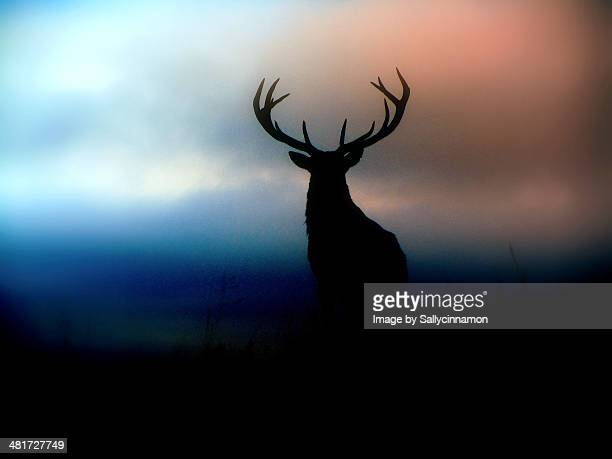 Red Deer Stag Silhoutte
