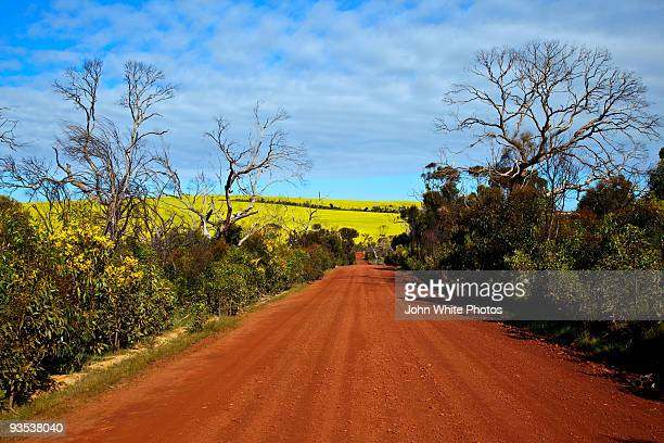 Red dirt road and canola crops