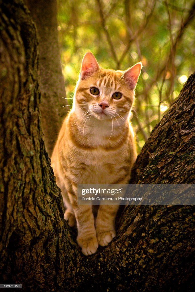 Red domestic cat : Stock Photo