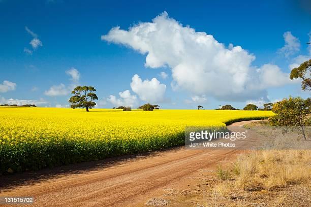 red dusty road and yellow canola. south australia. - porto lincoln - fotografias e filmes do acervo