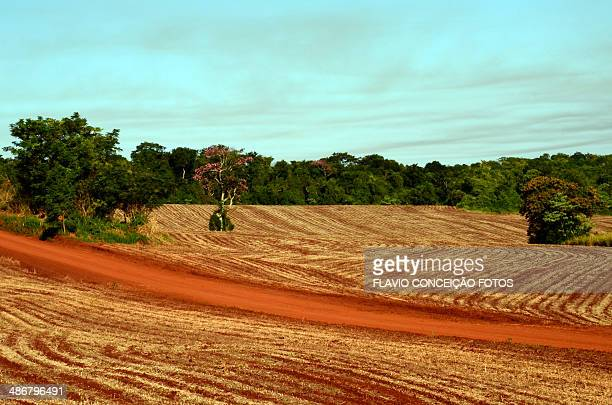 Red Earth Brazil