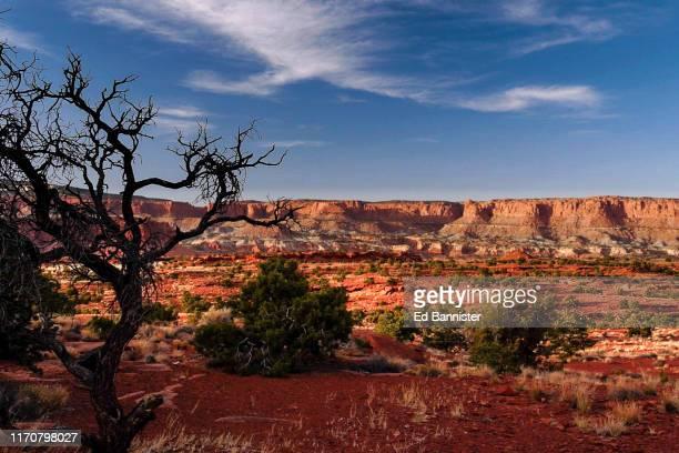 red earth red rock cliff dead tree blue sky clouds - südwesten stock-fotos und bilder