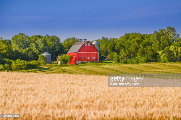 red farmhouse - farmhouse stock pictures, royalty-free photos & images
