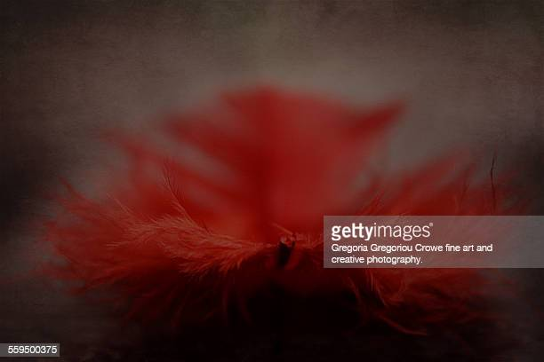 red feather - gregoria gregoriou crowe fine art and creative photography stock pictures, royalty-free photos & images
