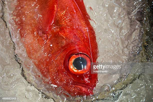 red fish on ice in tsukiji market, tokyo, japan - redfish stock photos and pictures