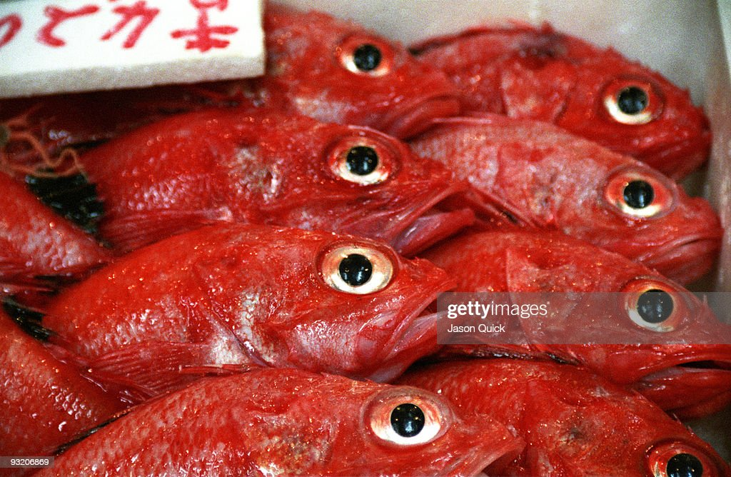 Red fish tsukiji fish market tokyo stock photo getty images for Types of red fish