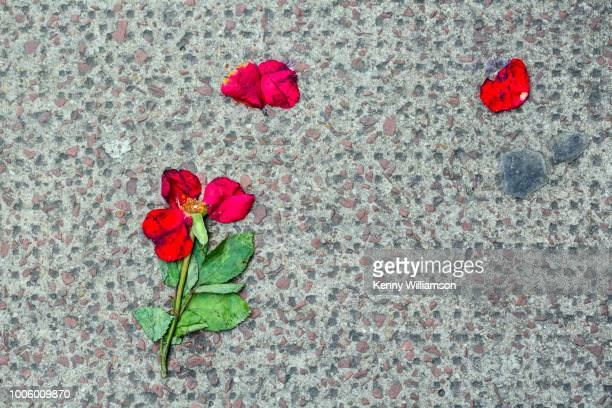 A red flower discarded and flattened on a city pavement