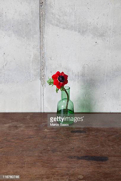 A red flower in a vase