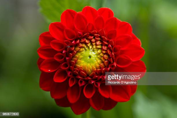 Red flower in close-up