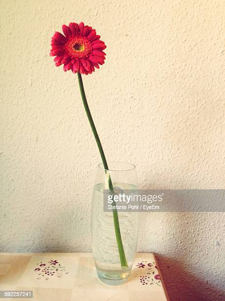Red Flower In Vase On Table At Home