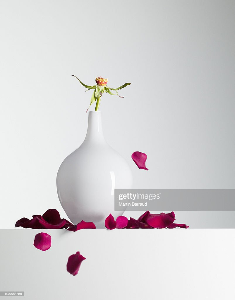 Red flower petals falling from stem in vase : Stock Photo
