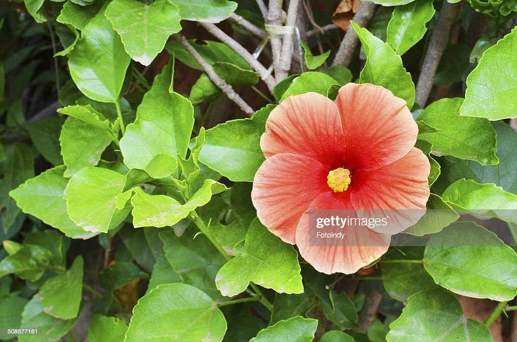 Red flower : Stock Photo