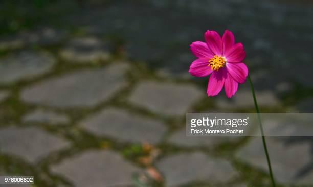red flower - montero flor fotografías e imágenes de stock