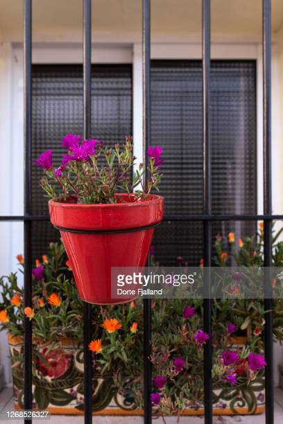 red flower pot with pink flowers in a window - dorte fjalland fotografías e imágenes de stock