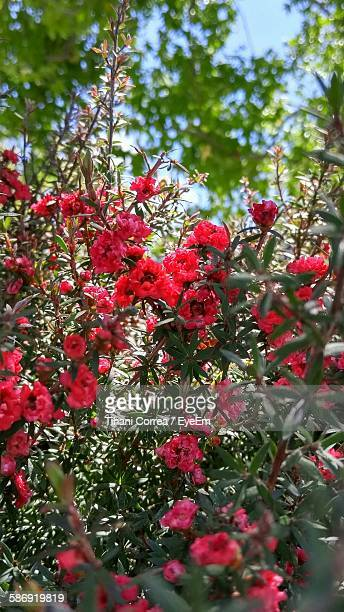 Red Flowers Blooming At Park