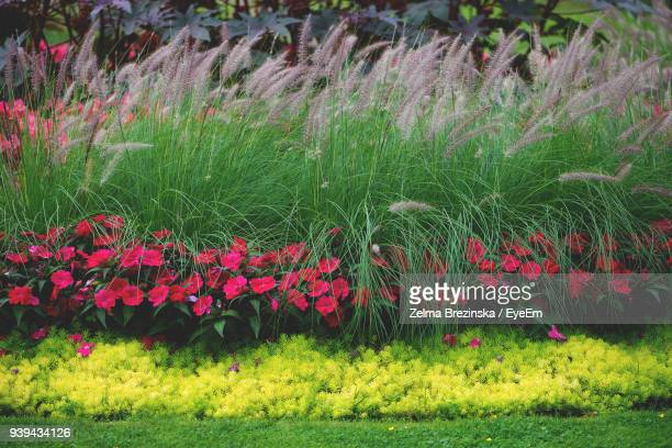 red flowers blooming on field - brezinska stock pictures, royalty-free photos & images