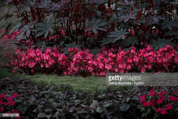 red flowers blooming on tree - brezinska stock pictures, royalty-free photos & images
