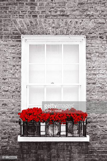 Red flowers in window box against a black and whi