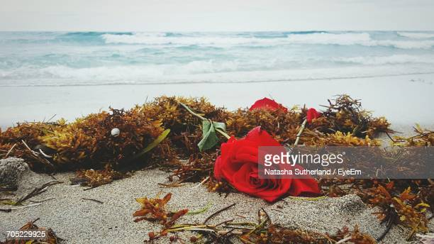 red flowers on calm beach - delray beach stock photos and pictures