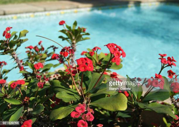 Red flowers on the edge of the pool