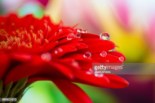 Red Flowers with Waterdrops