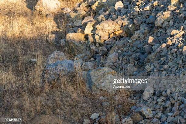 red fox at ankara wild life - camouflage stock pictures, royalty-free photos & images