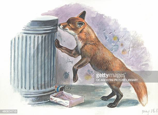 Red fox looking for food in a garbage bin illustration