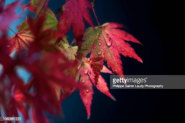 Red Fragile