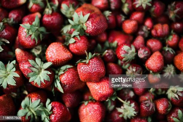 red fresh organic strawberries. - june stock pictures, royalty-free photos & images