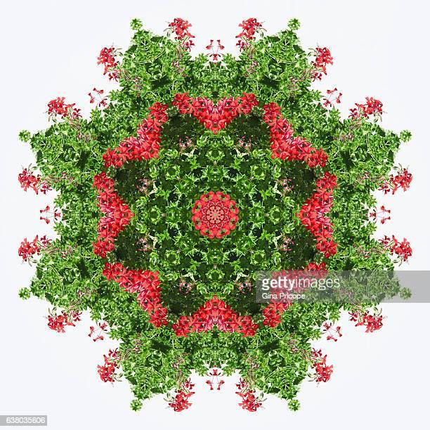 red geraniums, kaleidoscope effect. - kaleidoscope stock photos and pictures