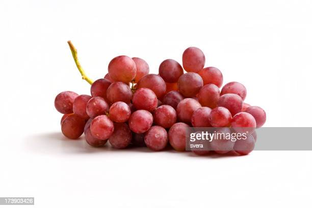 Red grapes on the vine on a white background