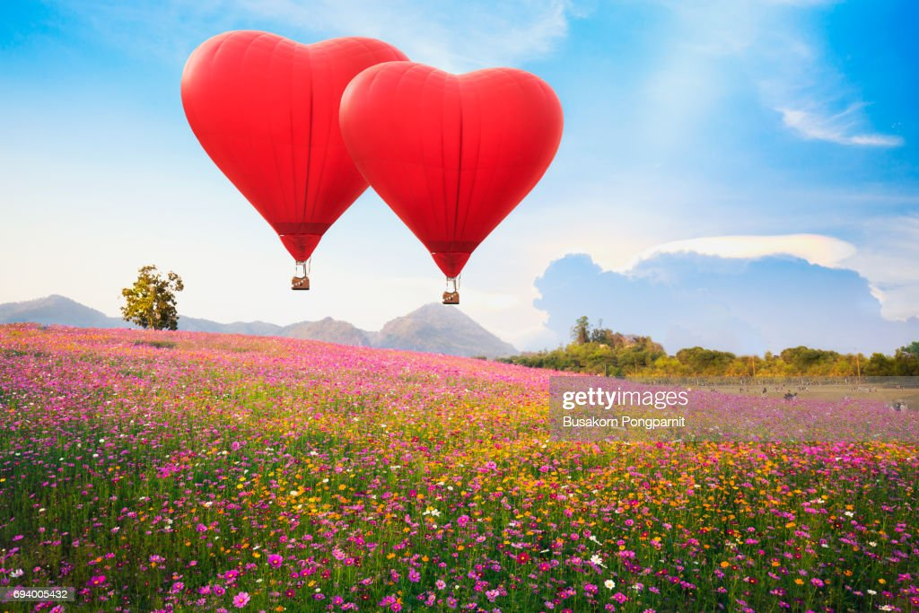 Red heart air balloon over on Beautiful Cosmos Flower in park : Stock Photo