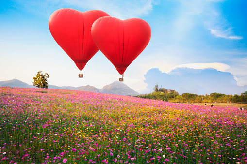 Red heart air balloon over on Beautiful Cosmos Flower in park - gettyimageskorea