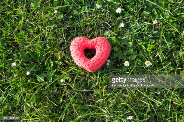 Red heart on the grass