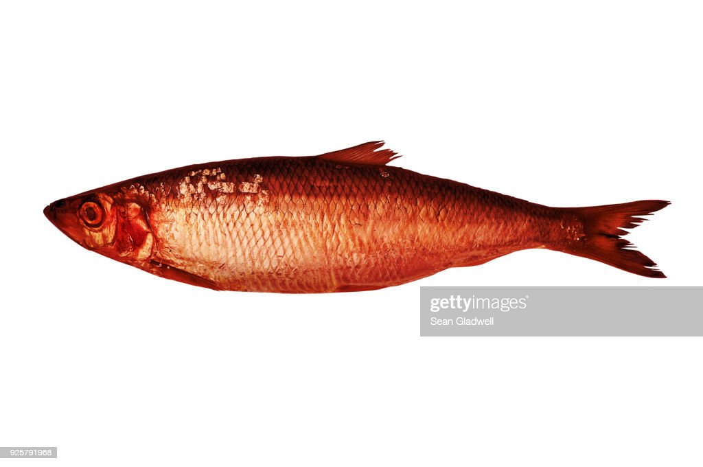 Red Herring High Res Stock Photo Getty Images