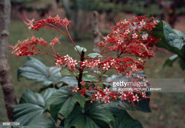 Red inflorescences.