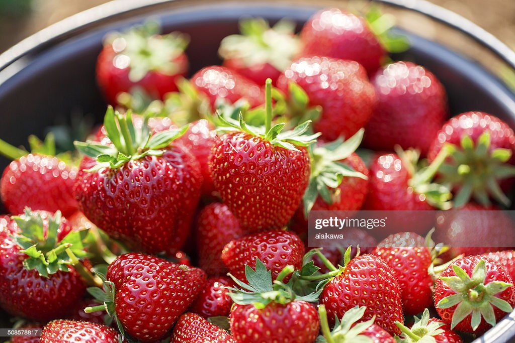 Red juicy fresh strawberries closeup in basket : Stock Photo