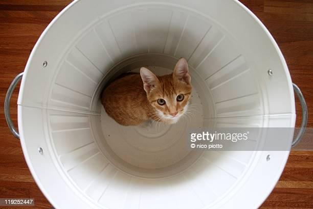 Red kitten in white metal garbage bin