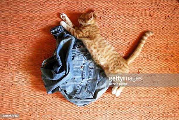 Red Kitten sleeping over  jeans