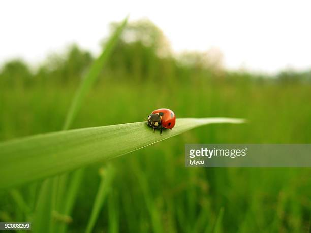 red ladybird - seven spot ladybird stock pictures, royalty-free photos & images