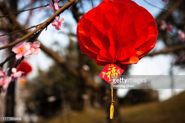 red lantern - chinese lantern festival stock pictures, royalty-free photos & images